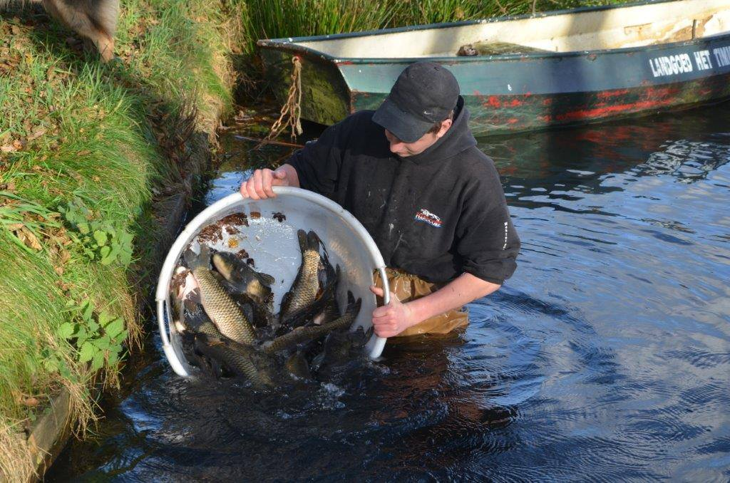 Karpers In Tuin : Koi karpers koi vissen in het stuk van water tuin meertje met